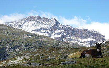La Savoie, région sauvage